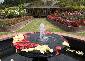 aotea-lagoon-rose-garden